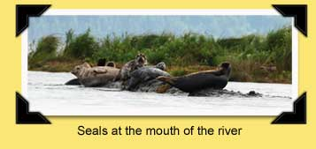 seals on the river