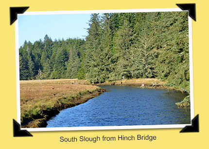 south slough